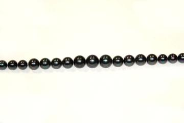 Pearl Shell black (Shape: Degrade of 8/16 mm.)